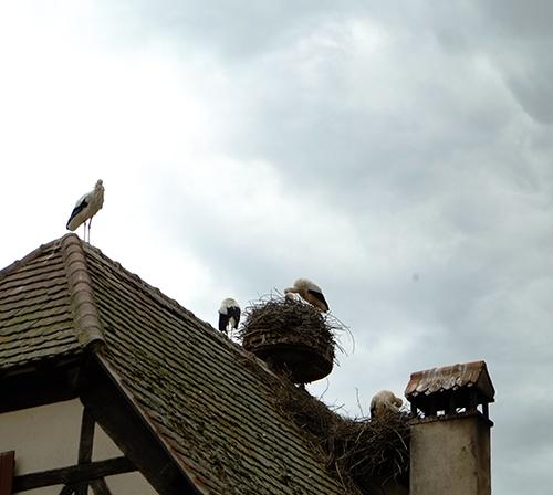 エコミュゼ/民家の上のコウノトリの巣。何故か四羽