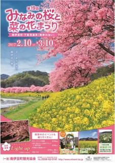 河津桜 みなみの桜と菜の花まつり