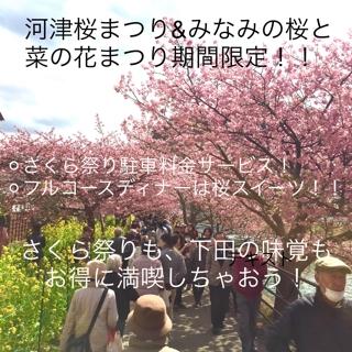 河津桜プラン