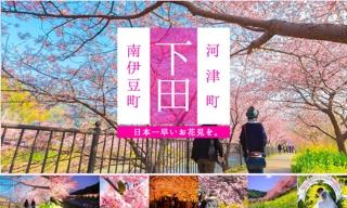河津桜まつり 河津桜まつりとみなみの桜と菜の花まつり