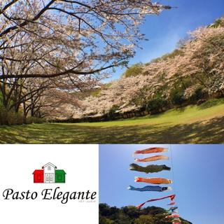 レンゲ祭りと稲取高原桜並木