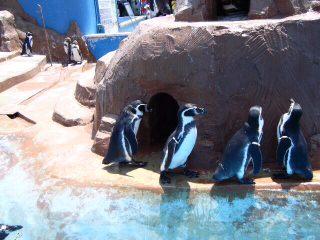 ペンギン1.jpg