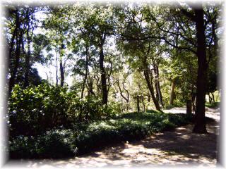 森林浴1.jpg
