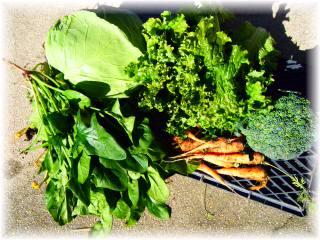 野菜いろいろ1.jpg