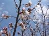 桜 2010