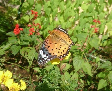 開窓の蝶々2.jpg