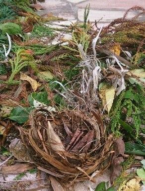 台風26号鳥の巣.jpg