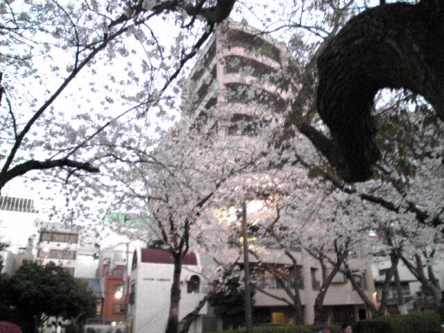 桜~01.jpg