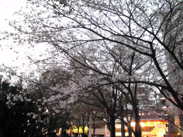 桜~02.jpg