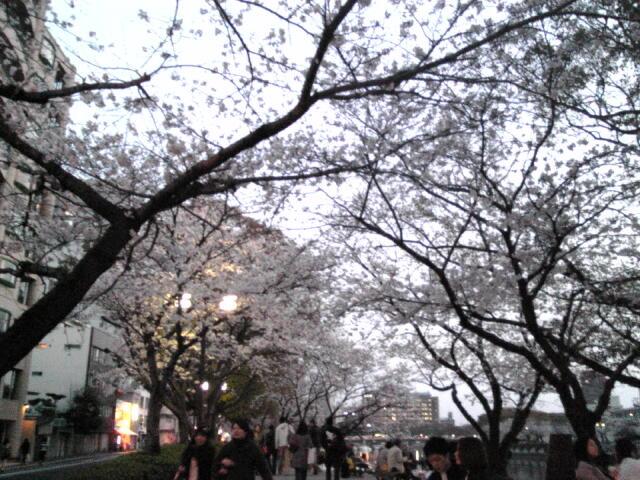 桜~04.jpg