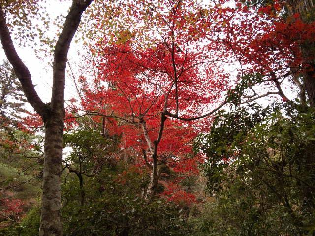 紅葉~11.jpg