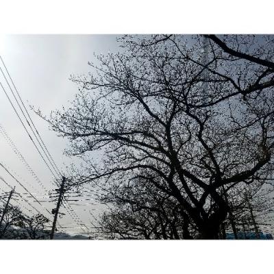 IMG_20180312_105402_463-500x500.jpg