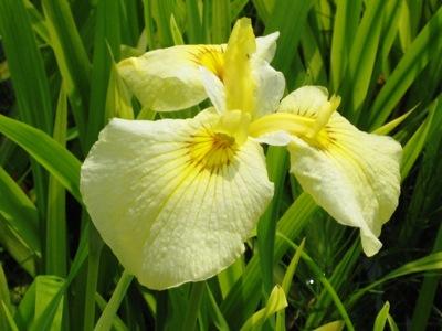 黄色い花もある