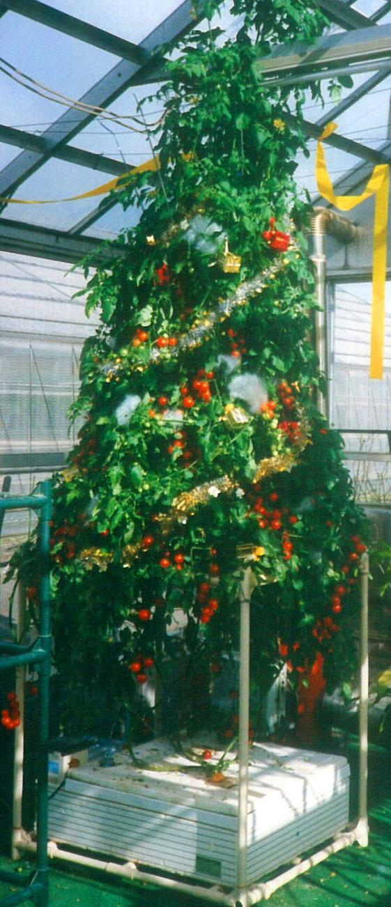 303クリスマスツリー