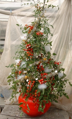 601クリスマスツリー