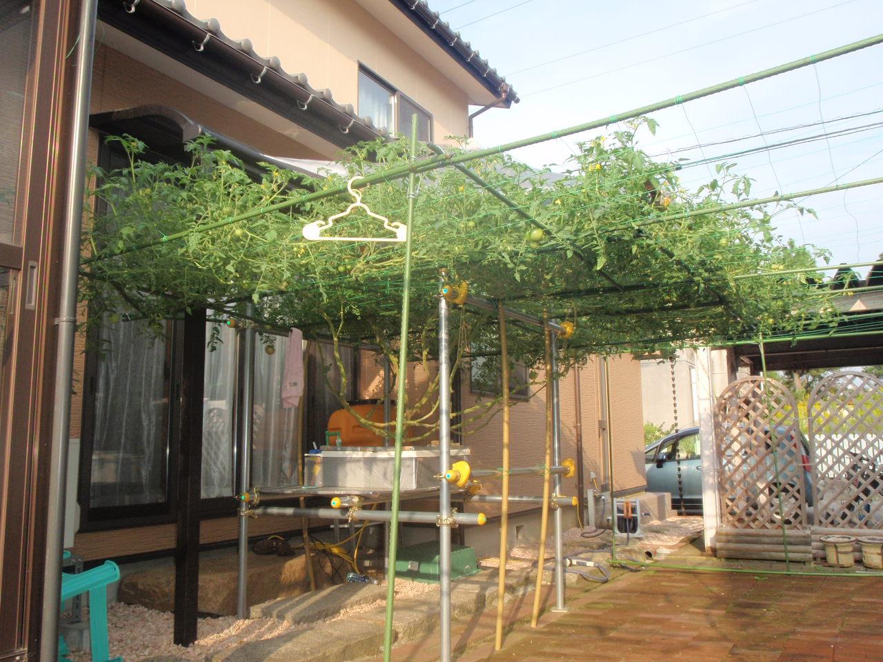 石川県Nさんの水平栽培