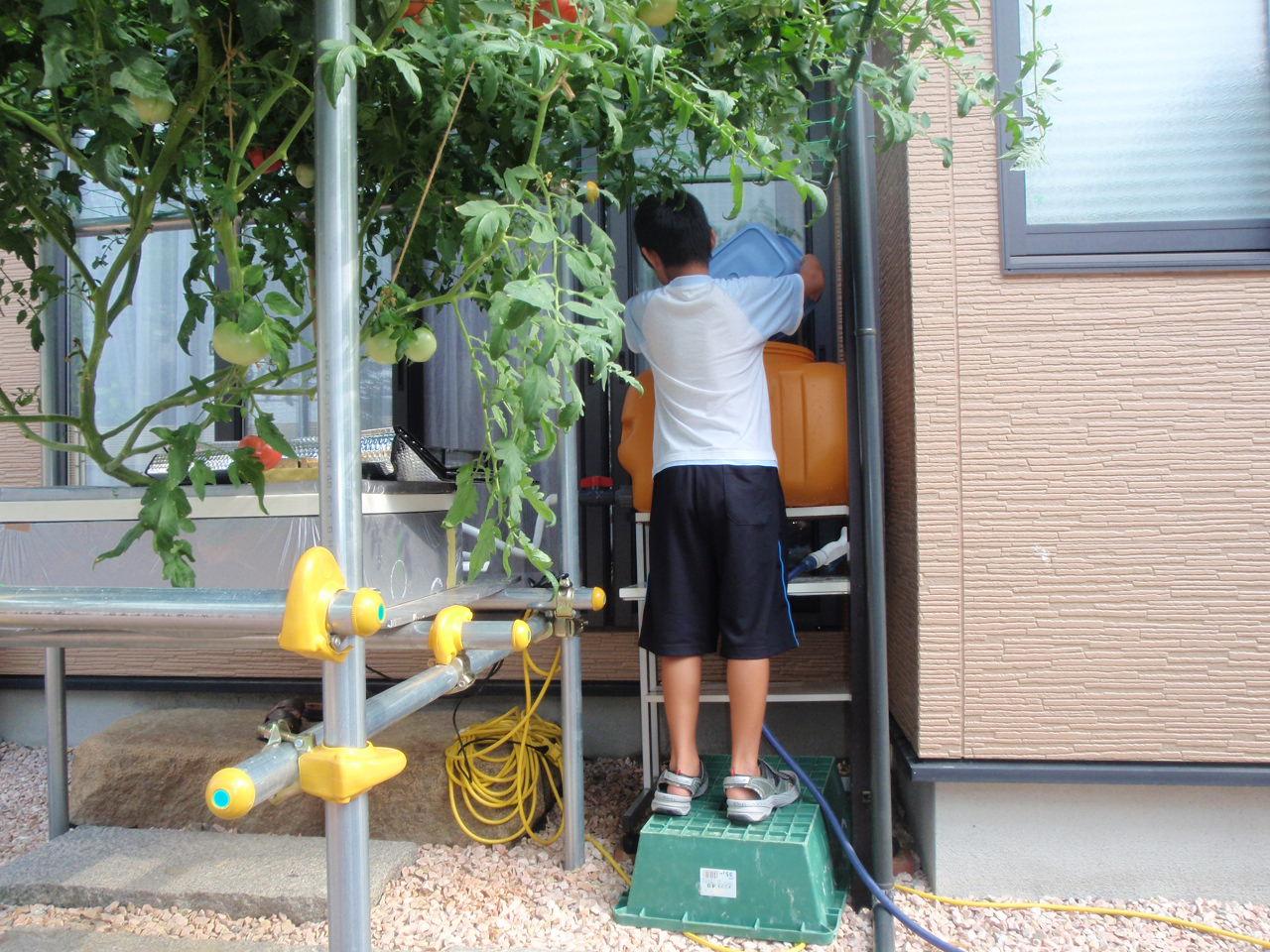 石川県Nさんの水平栽培8月