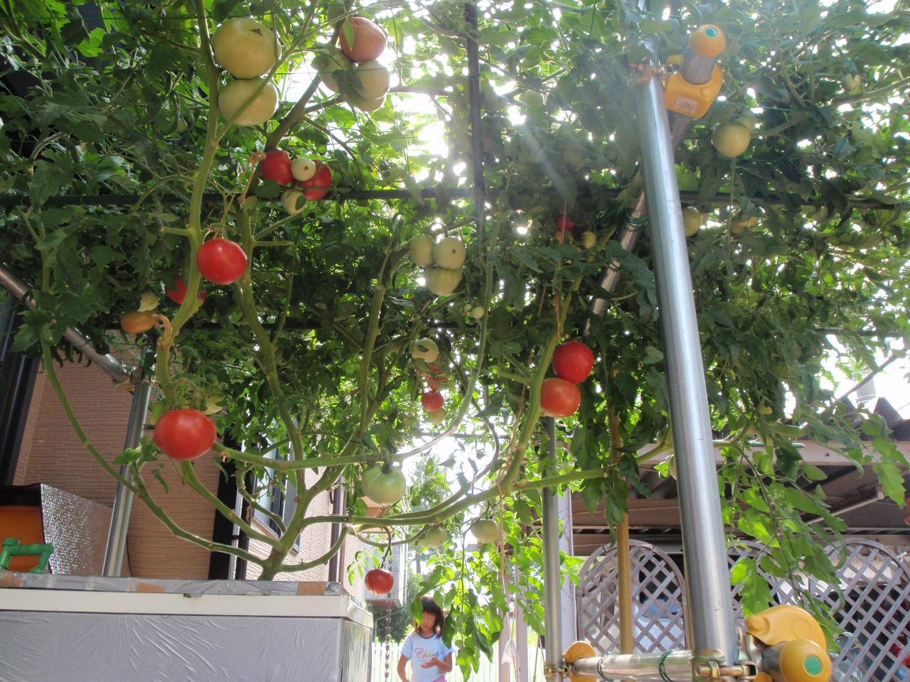 2010トマト