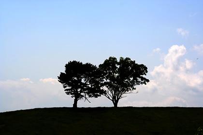 20050618_twotree