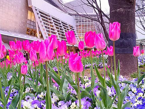 六本木ヒルズの少し早い春