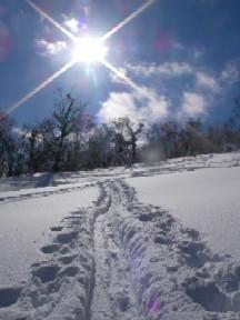 雪の結晶が輝いていました