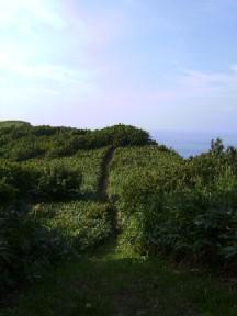 海の見えるトレイル