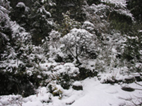 花の臺に雪積もる