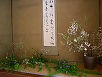 呈茶席の床の花