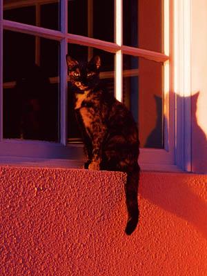 フロリダの猫