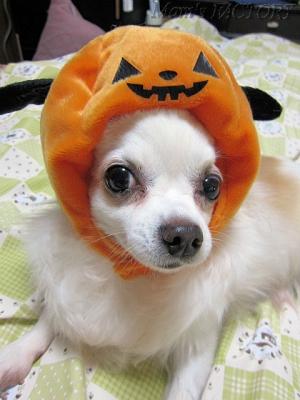おばけかぼちゃなじゅり