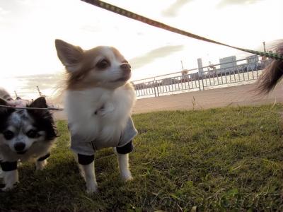 風が強いね