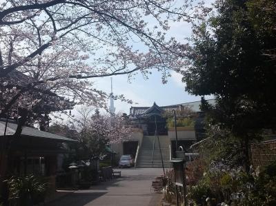 燈明寺と桜