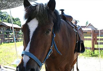 ブルーメの丘のお馬さん