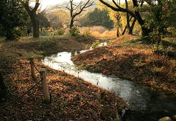三島池公園の写真2