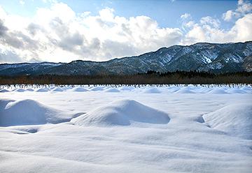 マキノ雪景色