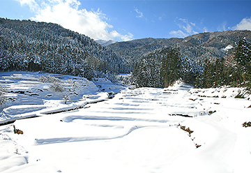 畑の雪景色