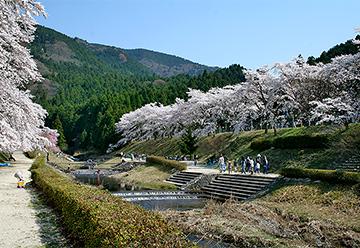鮎河桜まつりの写真1