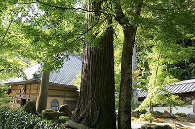 永源寺の写真4