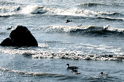 冬の琵琶湖(カイツブリ)