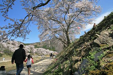 鮎川さくら祭り-写真2