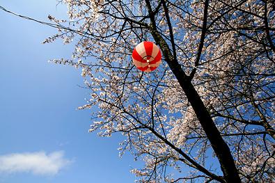鮎川さくら祭り-写真7
