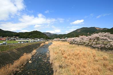 鮎川さくら祭り-写真9