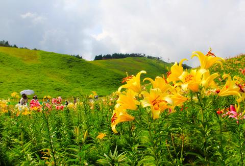 箱館山ゆり園