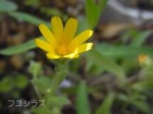 20140419fuyushirazu