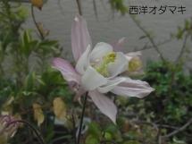 20140419odamaki
