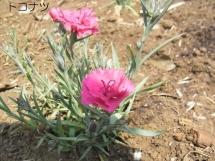 20140426China pink