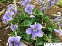 20160410fl_abiko10