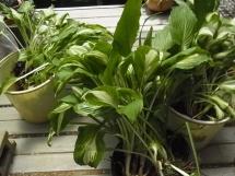 20160503plants1