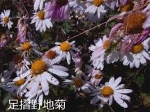 DSCN6269