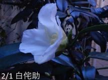 」DSCN6812[1]